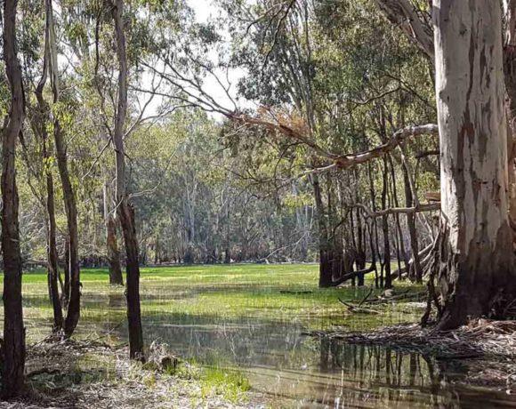 Floodplain Ecology Course