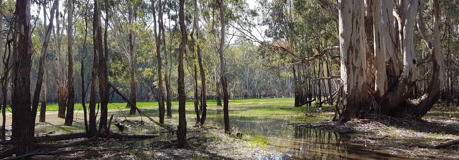 barmah flood plain