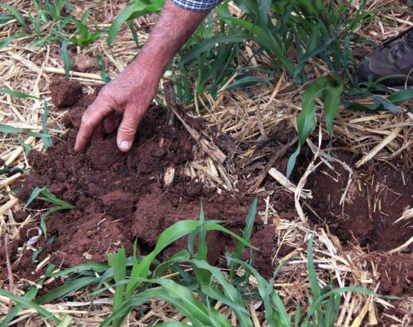 Soils Project